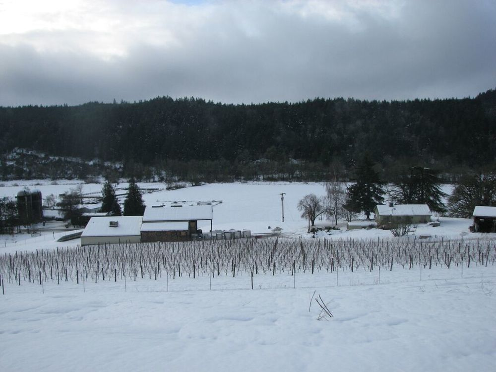 Estate Vineyard in snow.jpg