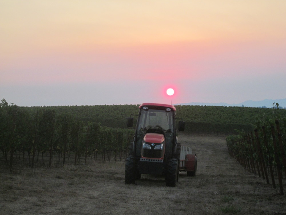 Freedom Hill Vineyard.JPG