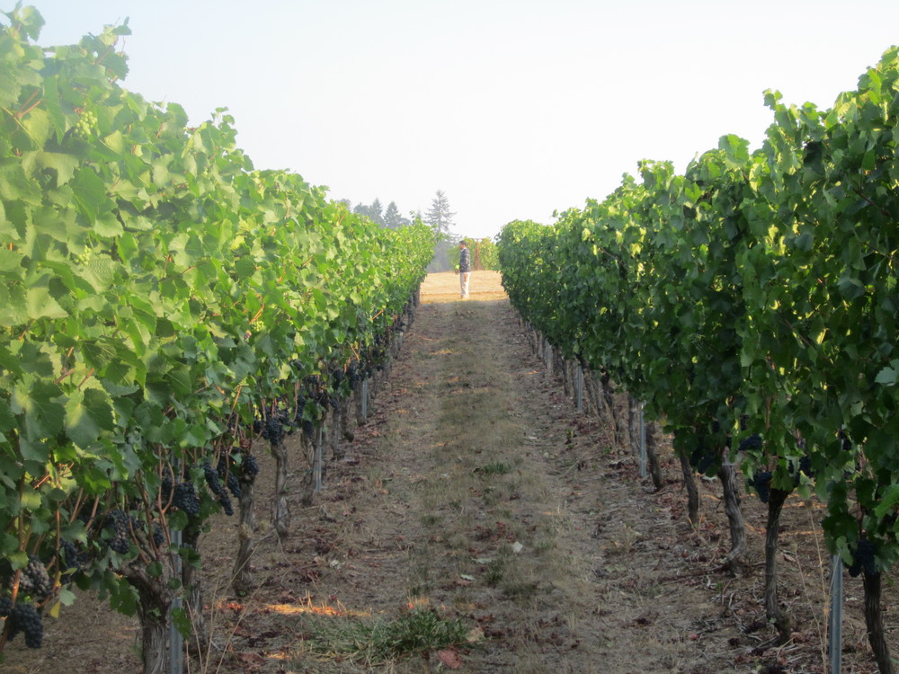 Freedom Hill Vineyard 2.JPG