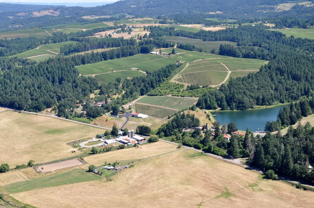 Aerial Shot Vineyard.jpg