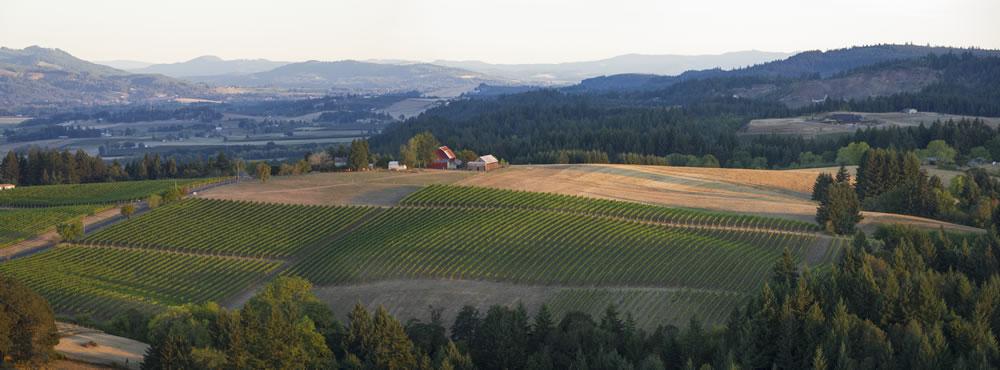Top-of-RR-Aerial-Chehalem-Ridgecrest-Vineyard_20120930_828-Edit-2-2.jpg