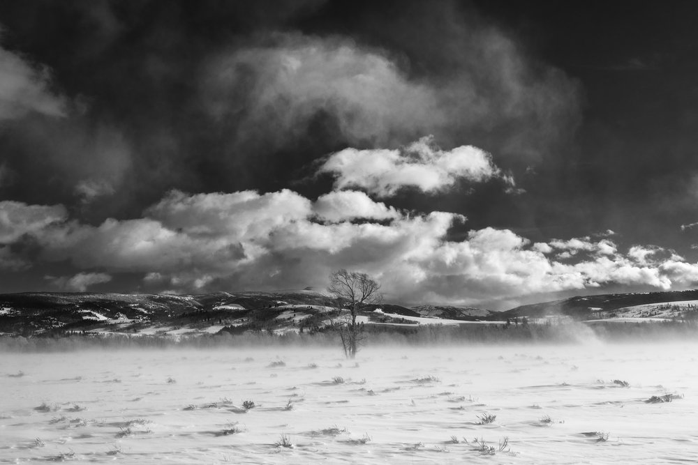Lone Wind