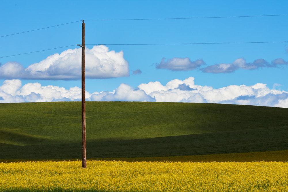 Canola Pole