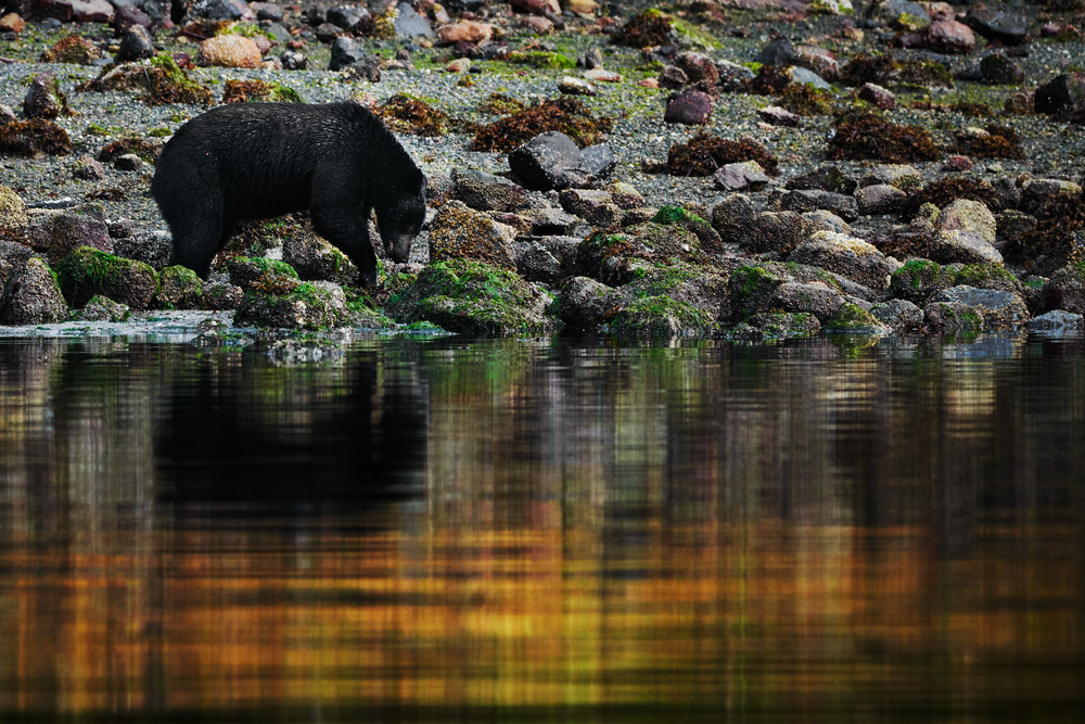 Foraging in reflection