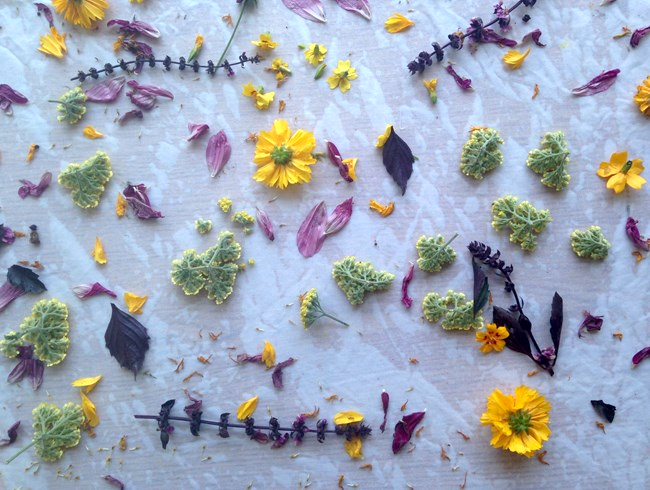 Just-harvested flowers are laid out on wet fabric as part of the dyeing process. Photo by: Jonny Thomas for  Pine House Edible Gardens .