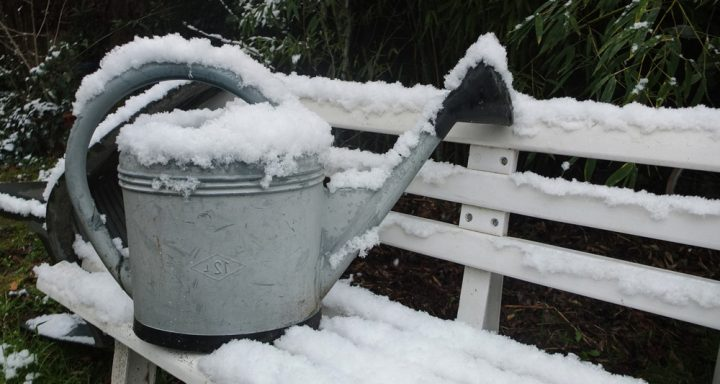winter_garden_preps_blog-720x384.jpg