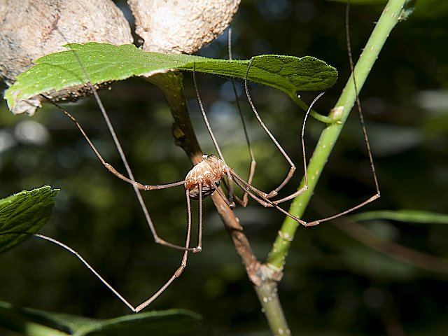 Granddaddy long legs David Young Photo Print $25
