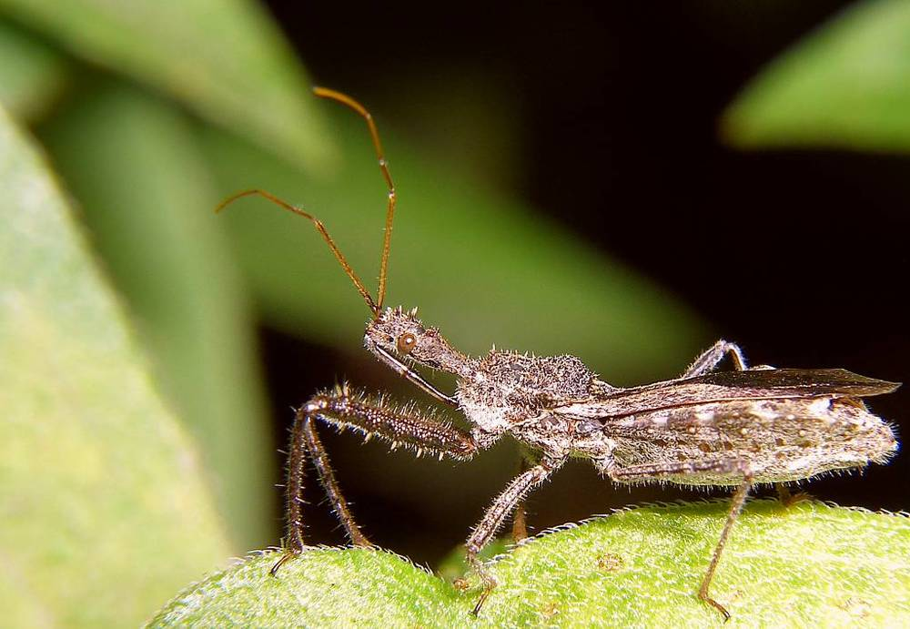 Assassin Bug David Young Photo Print $25