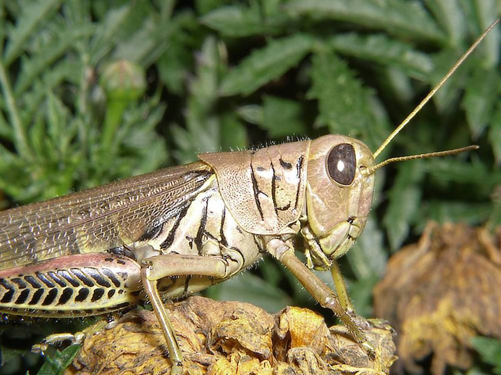 Grasshopper David Young Photo Print $25