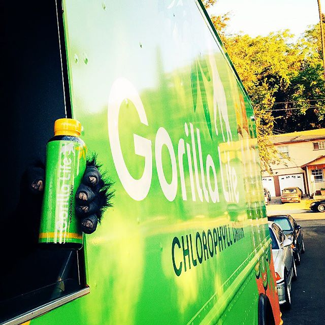 Hey East LA! The Gorilla is all around town today doing demos! First up find us at Lassens Echo Park from 11:30-2:30pm AND THEN we'll be at Lassens Los Feliz from 3:30-6:30pm! #GorillaOnTheMove #GorillaLife #chestpound #Chlorophyll #ChlorophyllWater #DrinkYourGreens #DrinkGorillaLife #DrinkLife #GreenDrink #Lassens #lassensmarket #lassensechopark #lassenslosfeliz