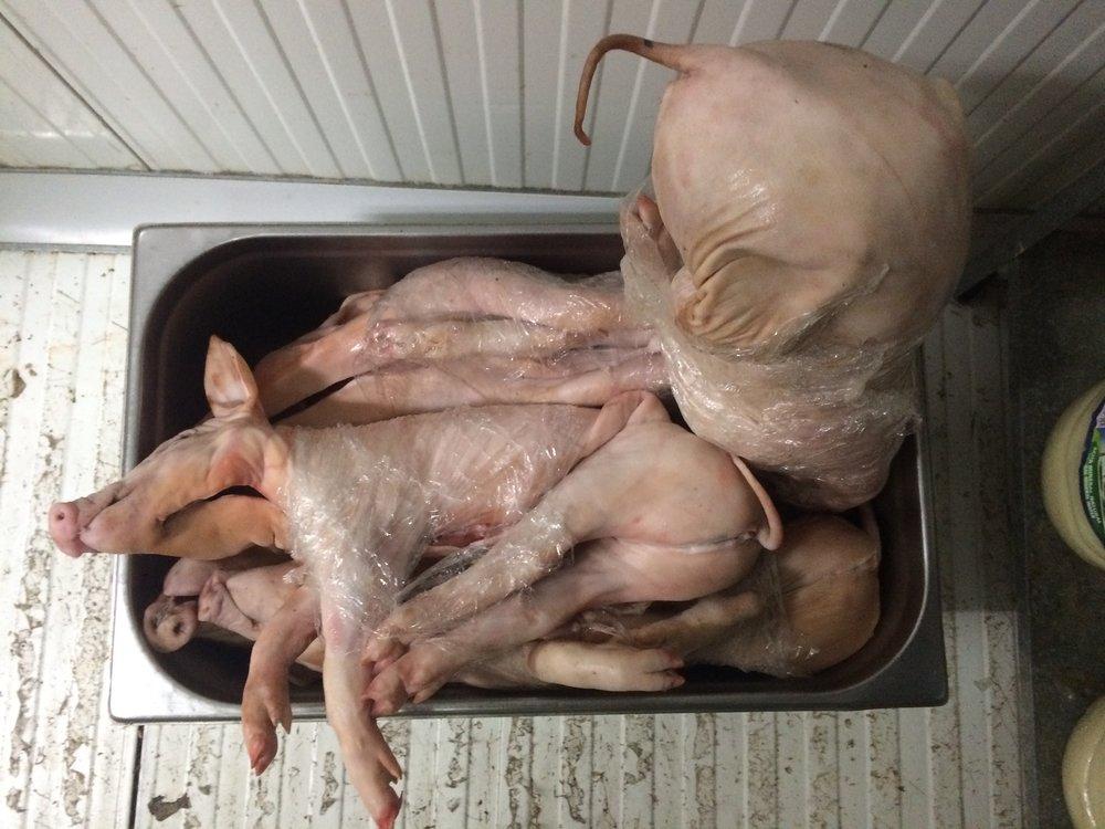 Suckling pigs