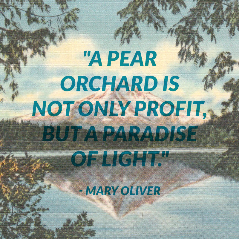 Pear_Quote