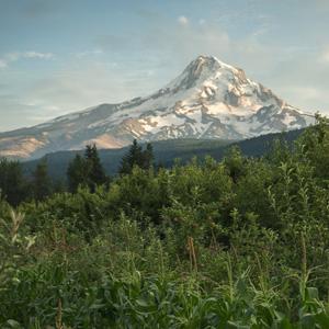 Mountain_Hood