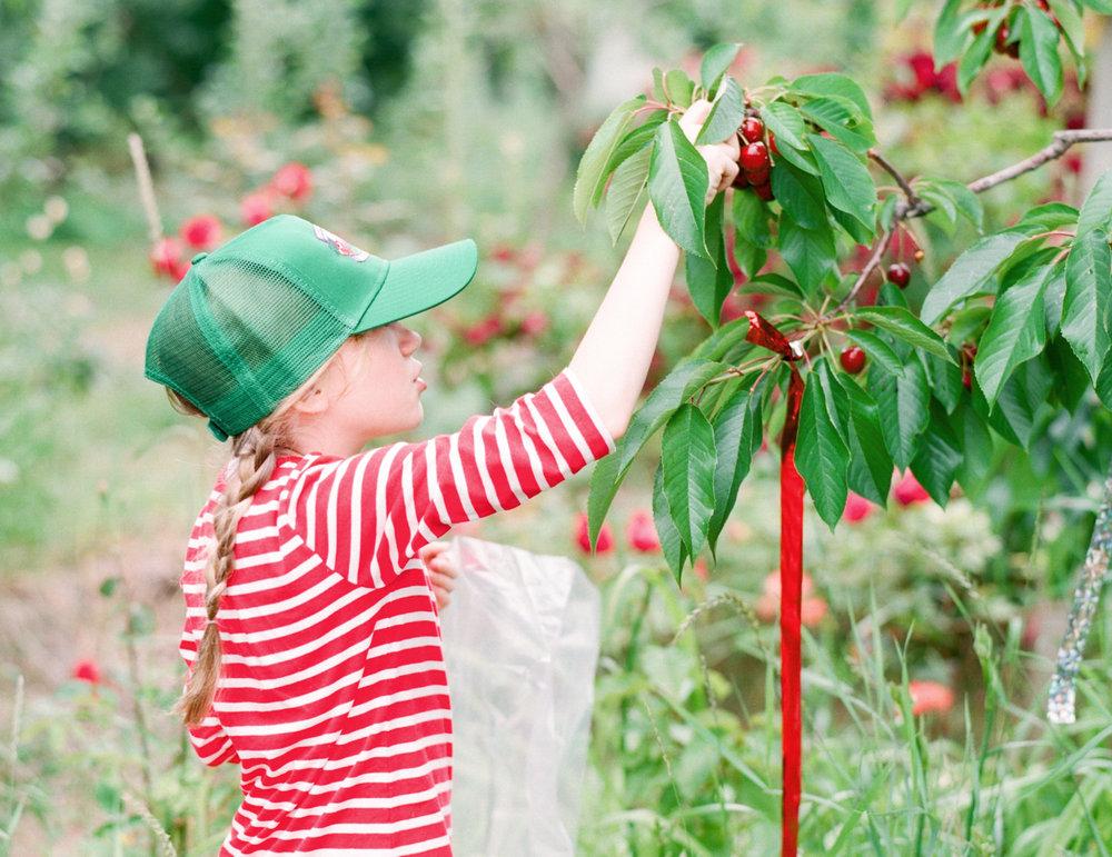 Cherries-Hero-1.jpg