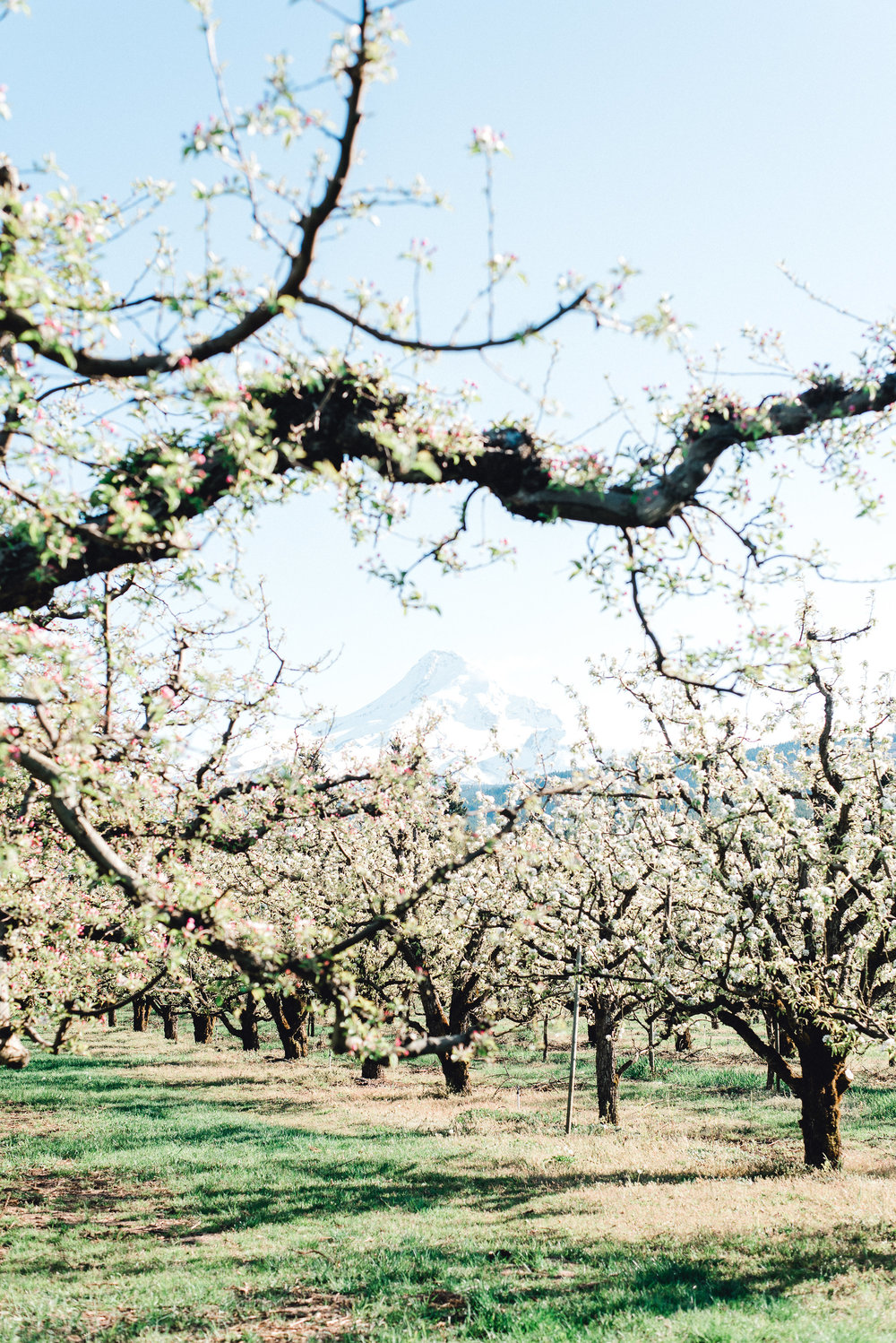 Lauryn_Kay_Photography_Mount_View_Orchard_Wedding_Shoot(167of220).jpg