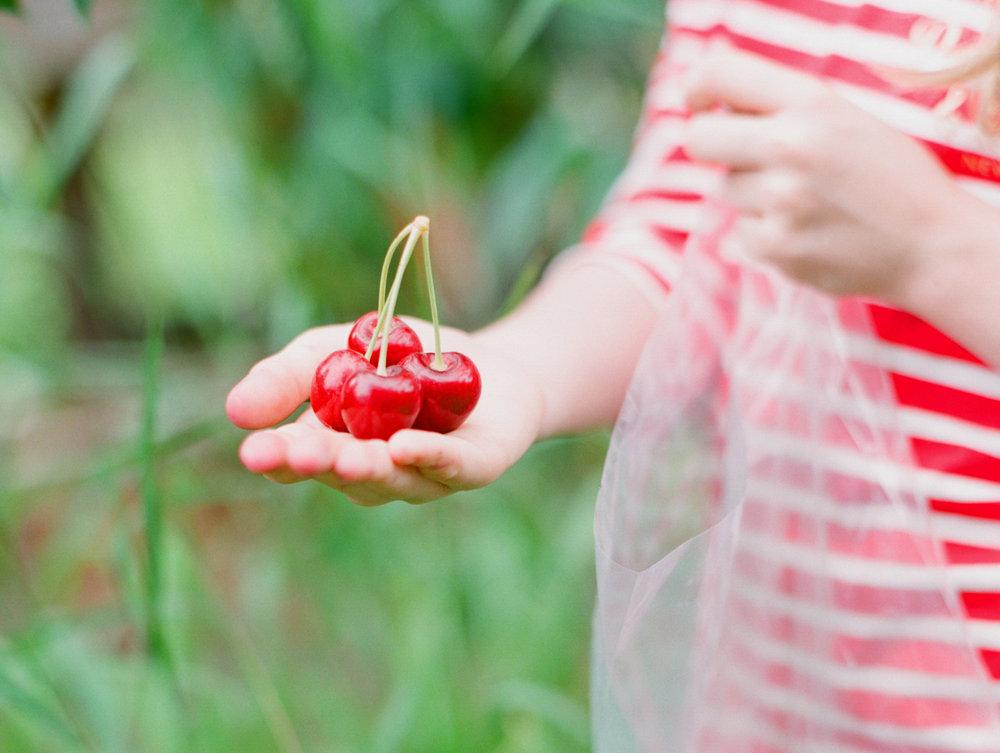 Fruit-Cherries-Hero