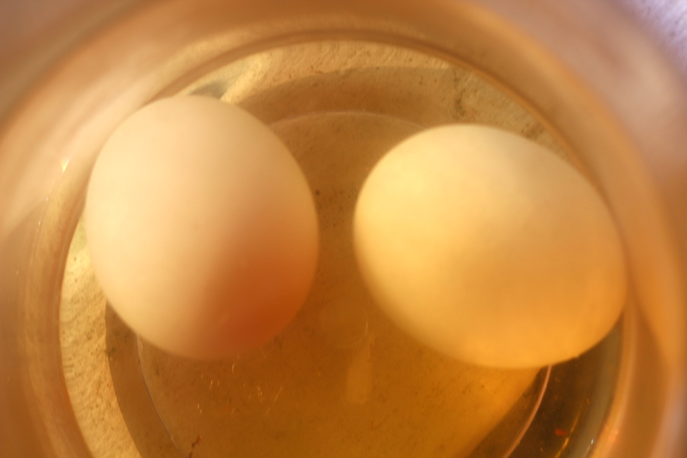 Fresh Eggs Soaking in Smoked Water