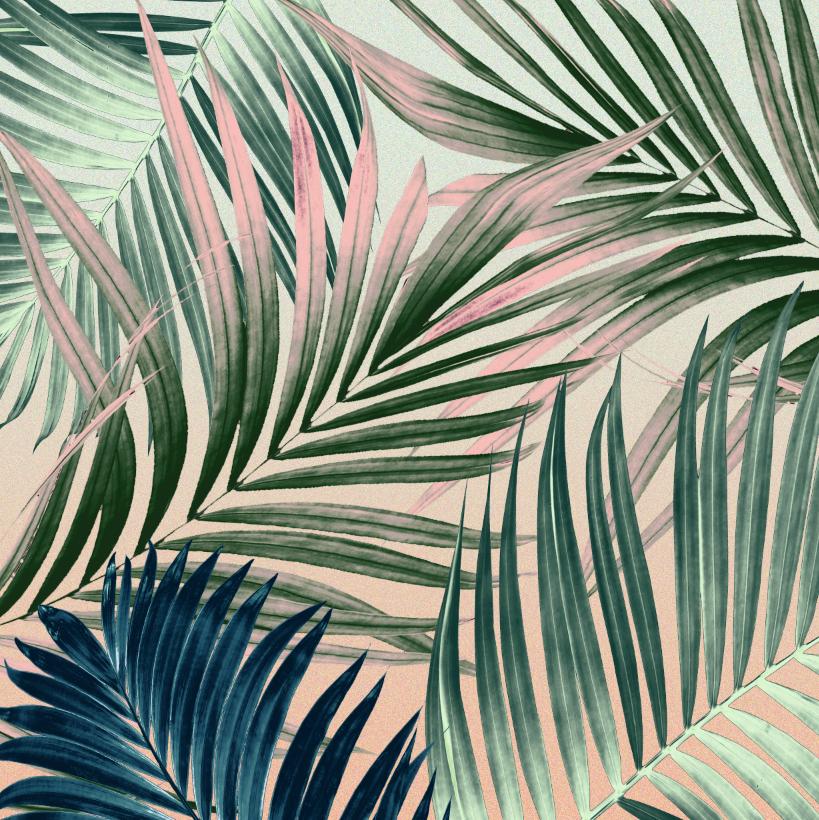 Miriam_castillo_palms_1.png