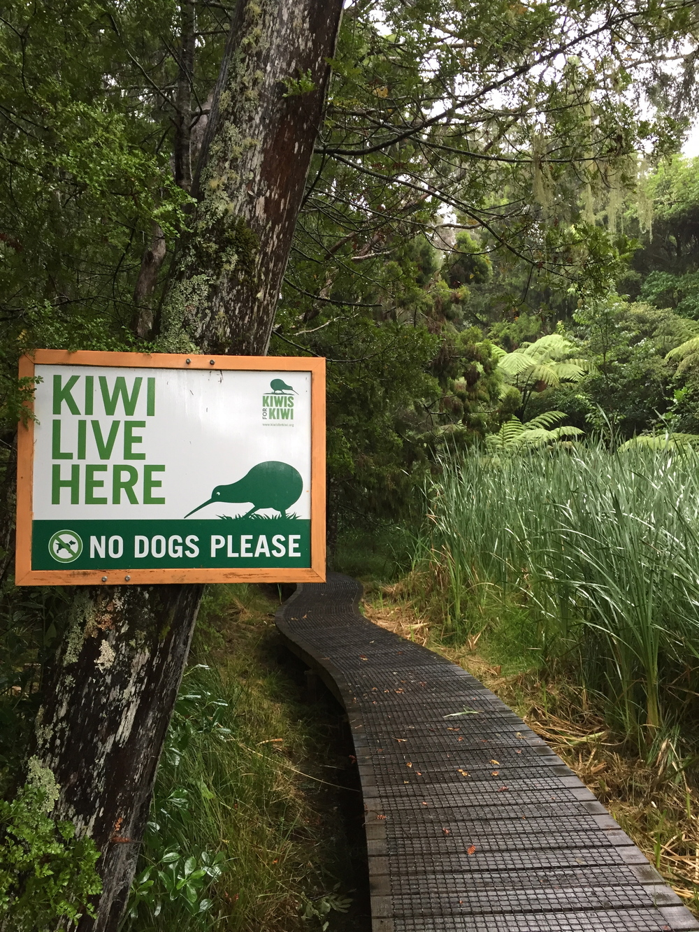 Kiwi Conservation Projects