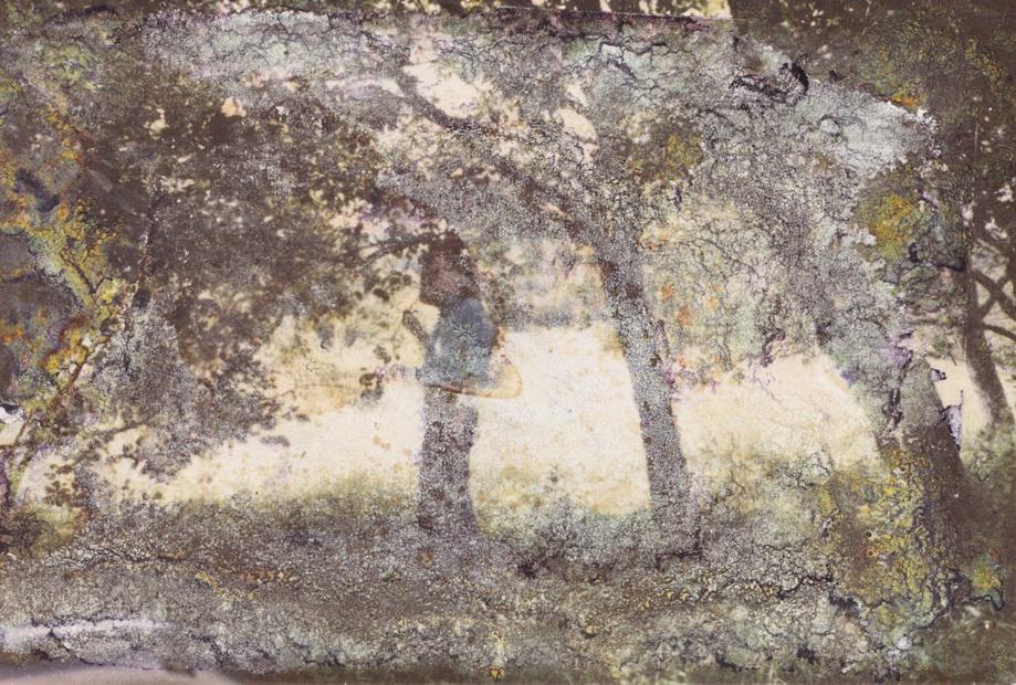 Au bois   C-print on Hahnemuhle paper  27x40 cm  2015