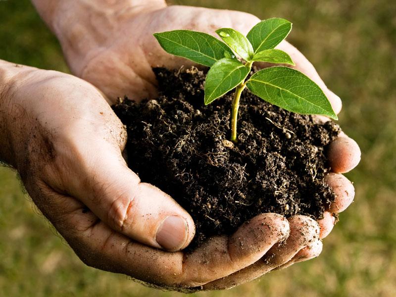 compost123.jpg