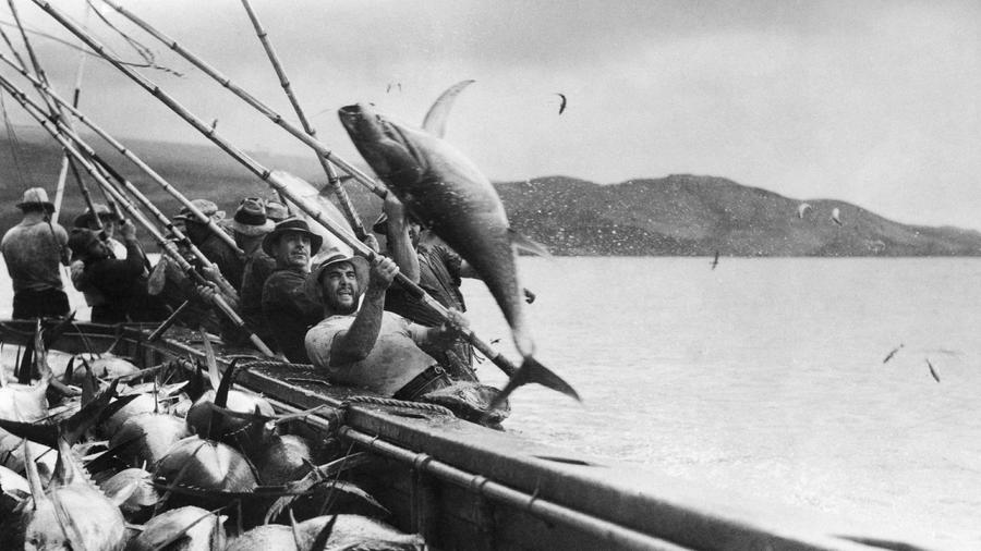 San Diego fishermen using the pole-and-line method to catch tuna. Image: San Diego History Center