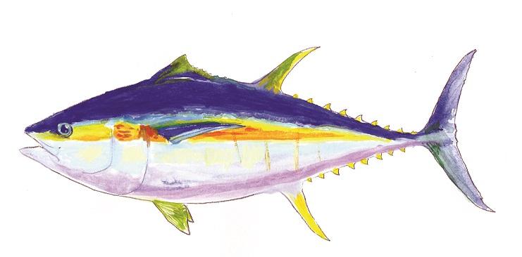 Bigeye Tuna.jpg