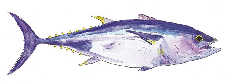 Bluefin Tuna (1).jpg