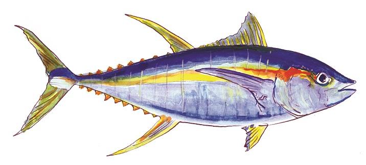 Yellowfin Tuna.jpg