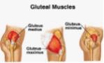 glute-muscles.jpg