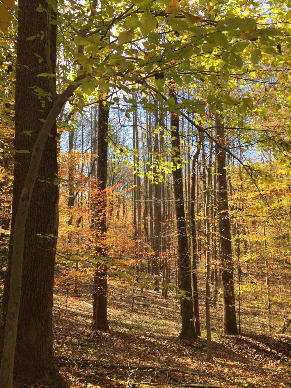 woods - SaraDoolittle.com