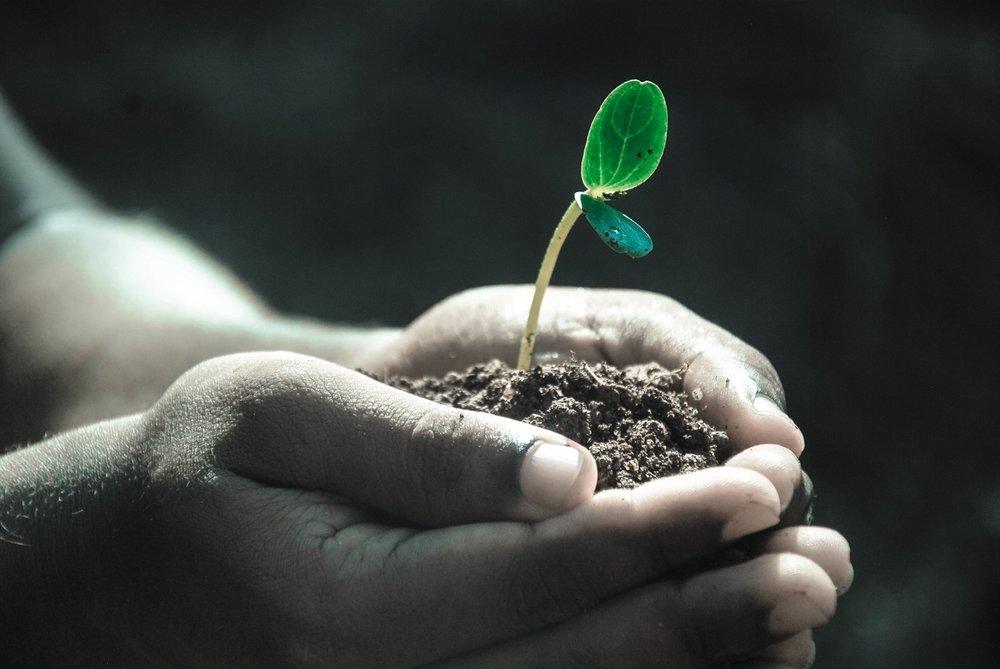 seedling-saradoolittle.com