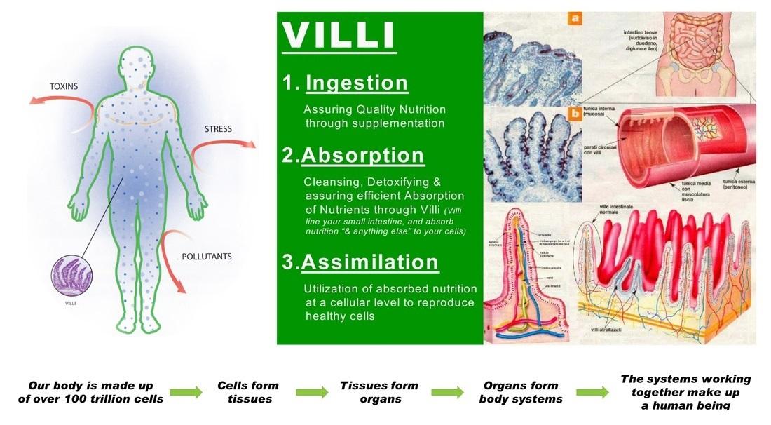 Cellular-Nutrition.jpg