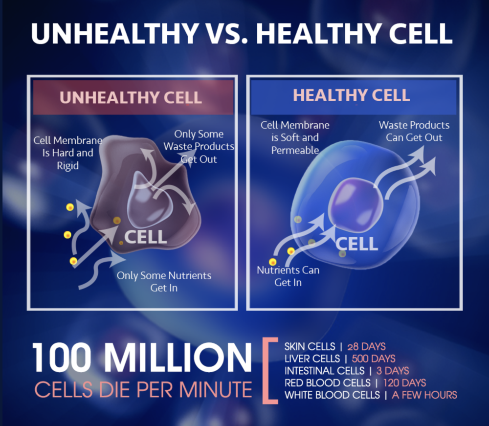 Cellular Nutrition - Cellular nutrition is high quality nutrition that based on it's cutting-edge science it acts at the cellular level feeding all 37 trillion cells with high quality nutrition, properly balanced helping the body to function optimally and get by itself to the optimal health, weight and energy. Today, there is only one nutrition company in the world that has managed to create cellular nutrition products. Cellular nutrition helps regenerate antioxidant activity within the cells, supporting normal mitochondrial energy and protecting cells against oxidative damage that accumulates during aging.