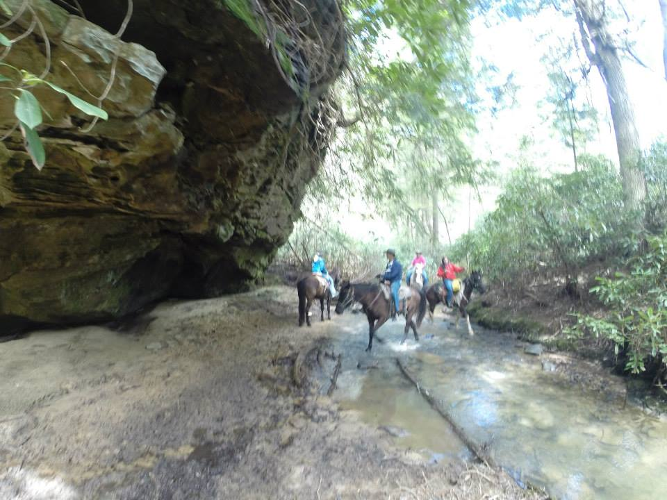 Big South Fork sandstone bluff