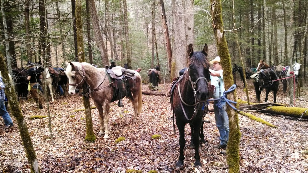 Larry McMillan preps horses during guided horseback ride in the Big South Fork