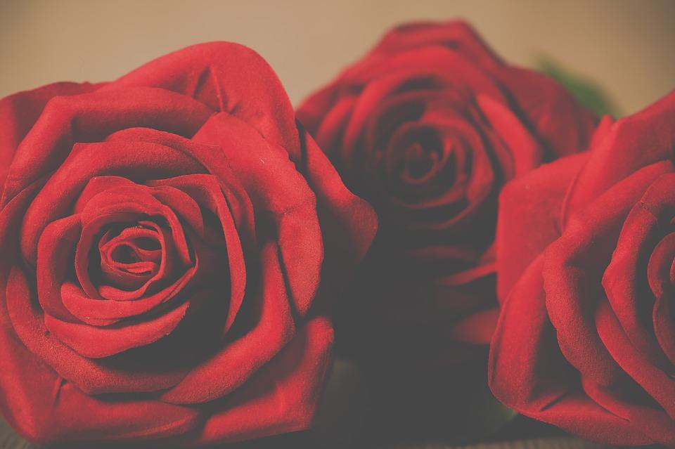 roses-3061489_960_720.jpg