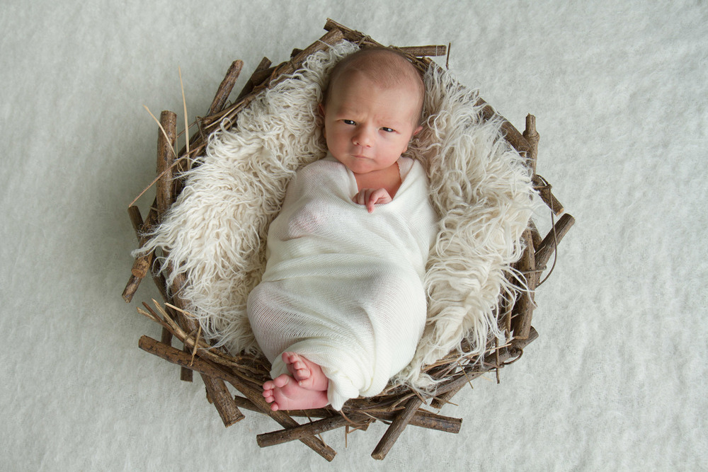 Hamilton-photographer-newborn-in-twig-nest-tiny-toes.jpg