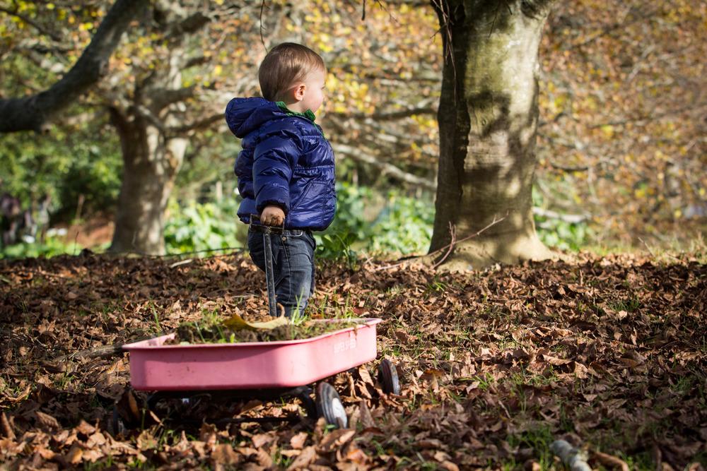 Waikato-photographer-toddler-playing-with-wagon.jpg