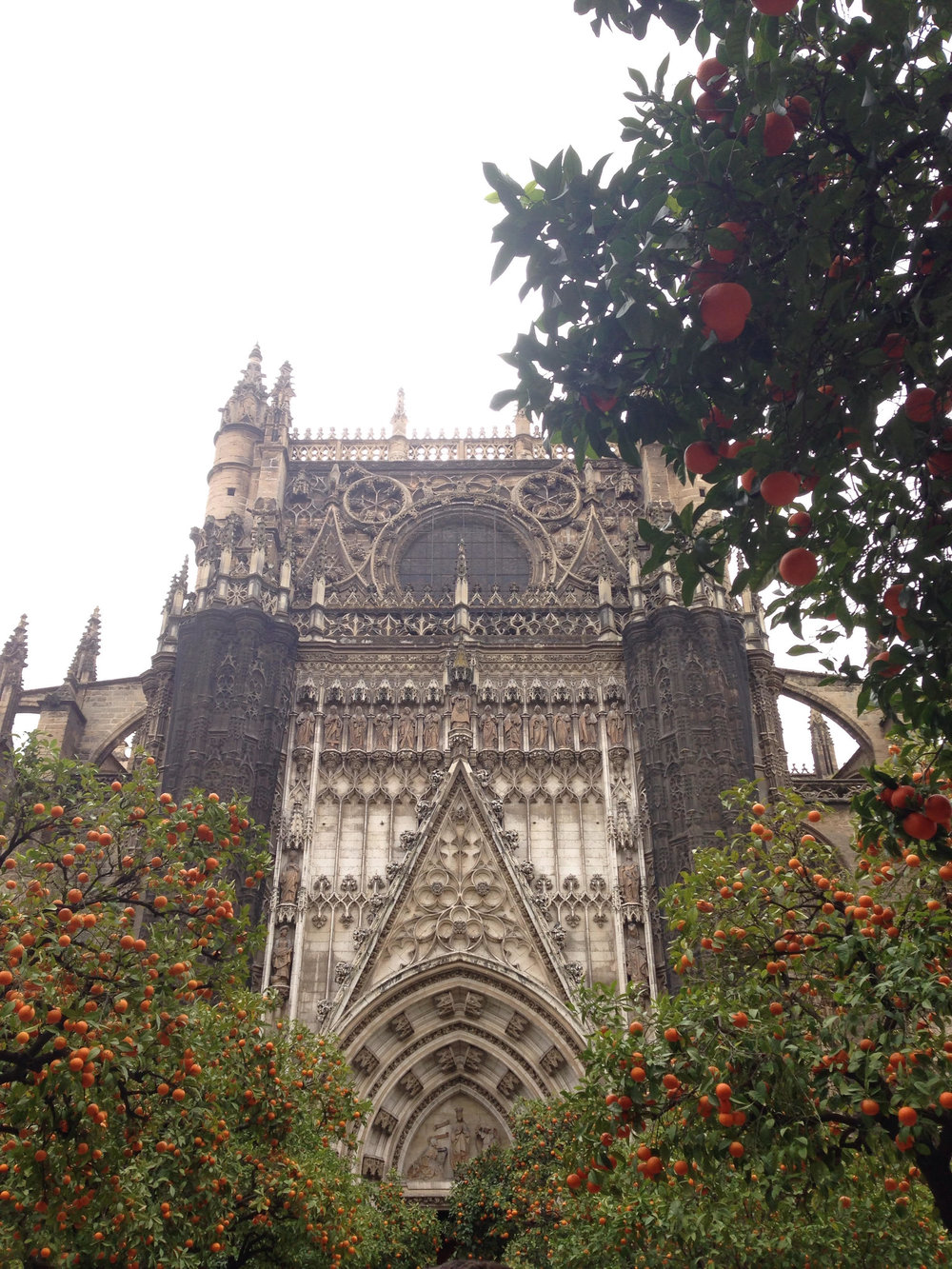 The Cathedral of Seville surrounded by typical orange trees.