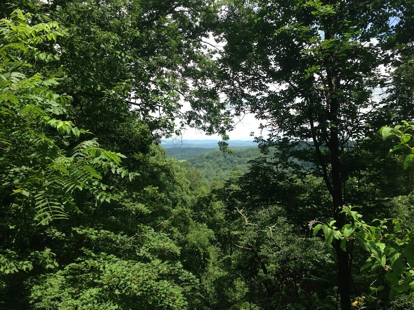 Hiking in Knoxville. So much green.
