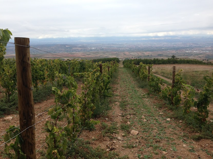 Vineyards walking from Alberite to Clavijo, two pueblos in La Rioja.