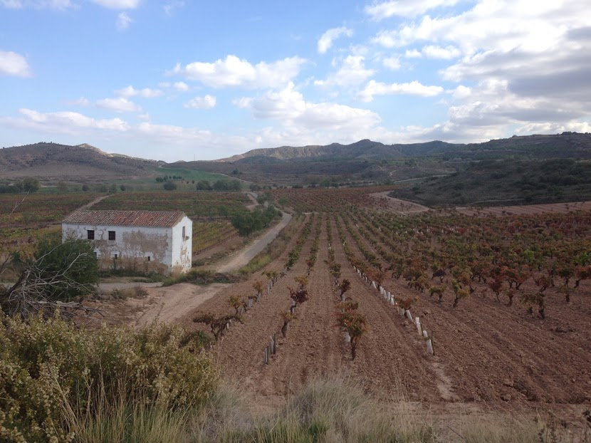 Vines as far as the eye can see when we hiked a stretch of El Camino between Logroño and Navarrete, La Rioja.