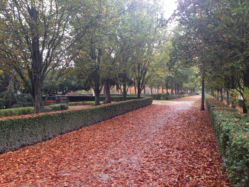 All the leaves in a park in Pamplona *heart eye emoji*
