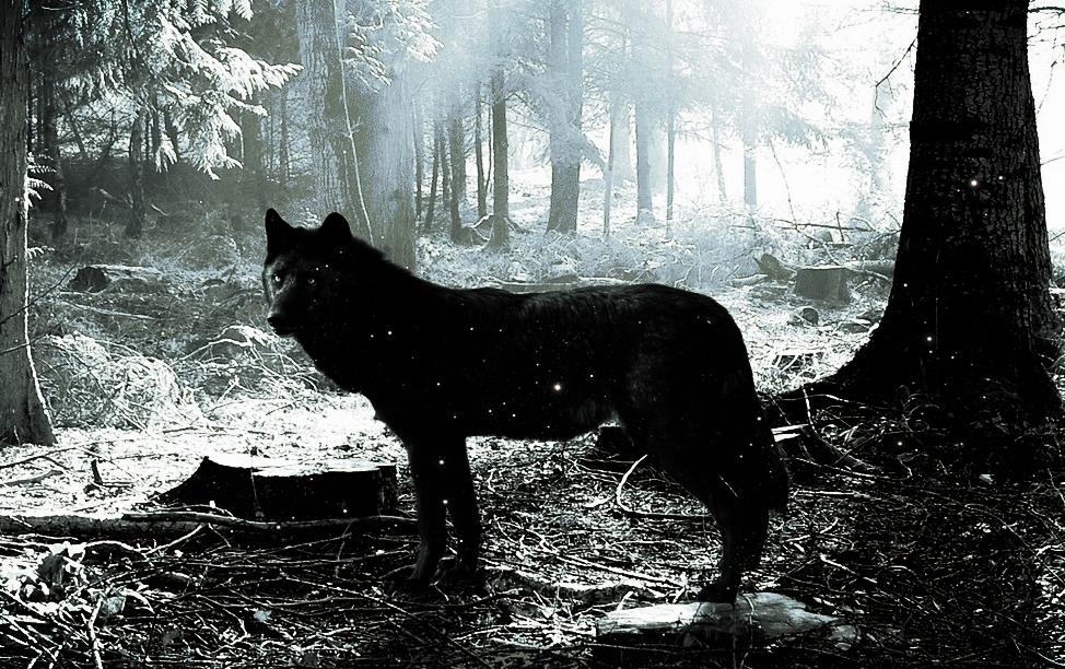 "(""Black Wolf"" | Allauddin Yousafzai)"