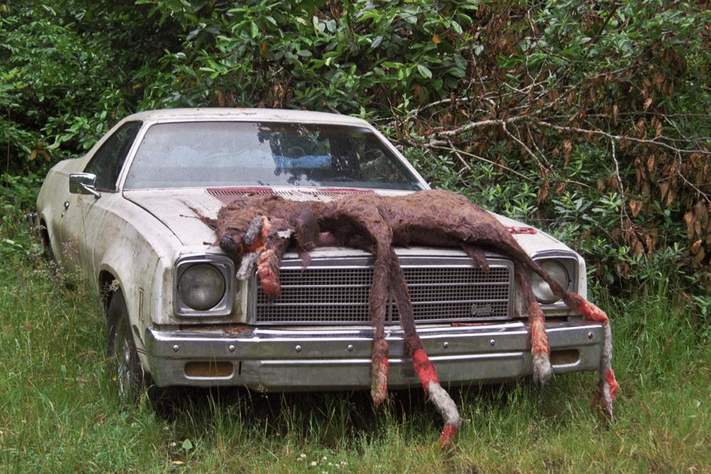 dead deer-1.jpg