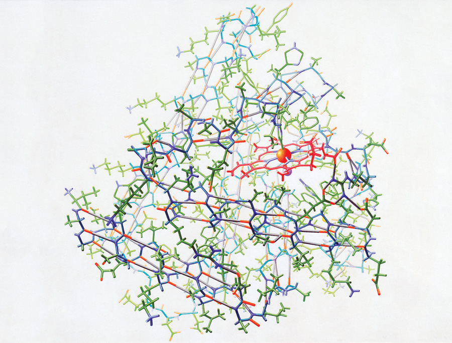 """Crystal structure of myoglobin (1961)"" from the Irving Geis Collection. Rights owned and administered by the Howard Hughes Medical Institute. Reproduction by permission only."
