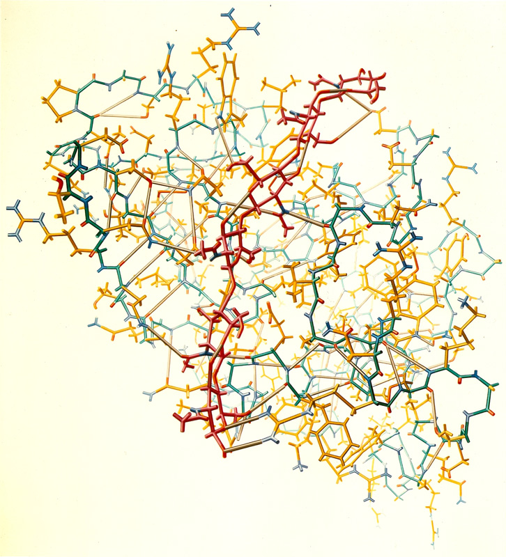 """Crystal structure of lysozyme (1966)"" from the Irving Geis Collection. Rights owned and administered by the Howard Hughes Medical Institute. Reproduction by permission only."