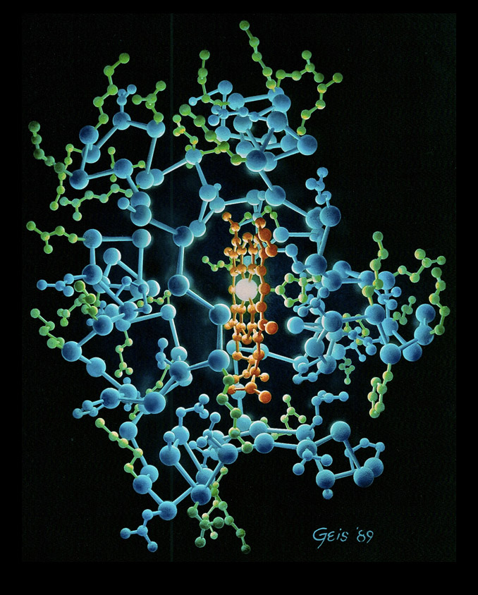 """Cytochrome C (1989)"" from the Irving Geis Collection. Rights owned and administered by the Howard Hughes Medical Institute. Reproduction by permission only."