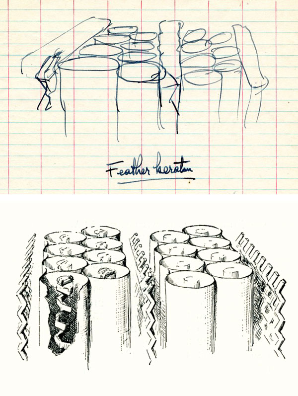 Top: Pauling's draft image of the proposed structure of feather rachis keratin; bottom: Hayward's drawing appeared in the final PNAS publication (PNAS 37, 265-261, 1951). Image source: Special Collections & Archives Research Center, Oregon State University Libraries.